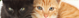 Alergia a Gatos – Como controlar?