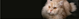 Gato Persa � Como cuidar?