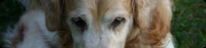 Ração para Cães Idosos