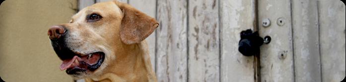Rações Super Premium para Cães