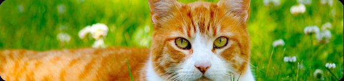 Rações Super Premium para Gatos