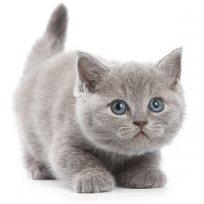 Adotei mais um gato. O que fazer agora?