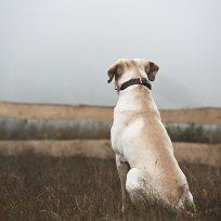 Cães idosos e a ansiedade da separação