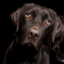 Doenças cardíacas nos cães
