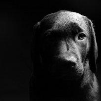O luto e os cães