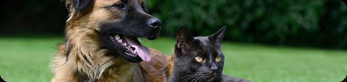 Como cuidar de cães e gatos com problemas intestinais?