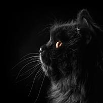 Os 10 mandamentos do gato