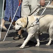 Cães-guia: Heróis invisíveis.