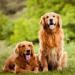 Os 10 mandamentos do cachorro