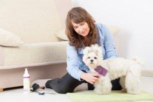 Como diminuir a queda de pelo dos cães?