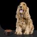 Nutrição canina: 10 dicas para alimentar corretamente seu cão