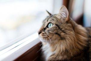 Derrubando mitos: por que os gatos não devem sair sozinhos