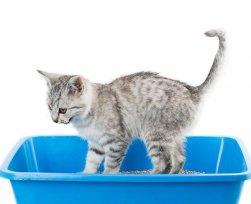Grande ou pequena, alta ou baixa? Saiba como escolher a caixa de areia perfeita para seu gato.
