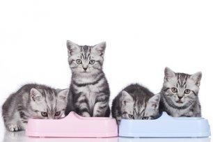 Alimentando os gatos: como proceder quando são vários gatos.