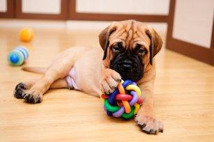 Brinquedos seguros x perigosos: 08 dicas úteis para brincar e proteger o seu cão.