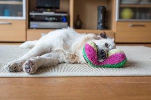 Tudo o que sabemos sobre onde seu cachorro pode estar pegando carrapatos.