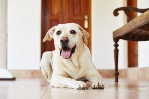 7 maneiras de evitar a fuga do seu cachorro