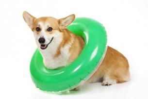 5 dicas para tornar o verão do seu cão mais agradável