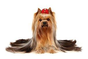Saiba mais sobre quedas de pelos de cães