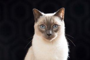3 dicas para gatos com asma