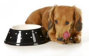 4 truques para trocar a ração sem seu cão perceber