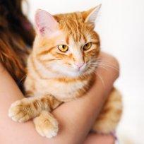 6 maneiras eficientes para cuidar da higiene do felino