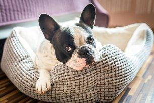 Seu cão tem alergia? Saiba qual a ração ideal para ele!