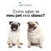 Como saber se você tem um cachorro obeso