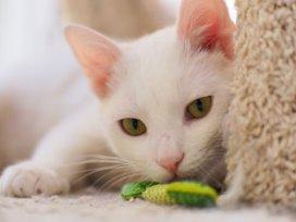 Brincadeiras para gato perder peso