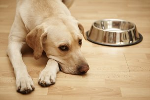 Melhor ração para cães com problemas renais