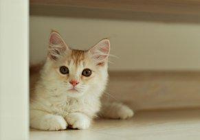 Melhor ração para infecção urinária em gatos