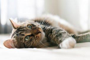 Melhor ração para gatos com doença renal crônica