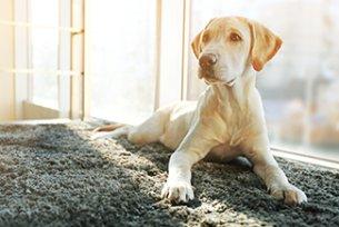 Melhor ração para inflamação gastrointestinal em cães