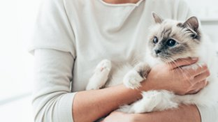 Melhor ração intestinal para gatos
