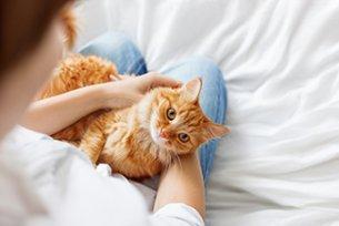 Melhor ração para doença inflamatória intestinal em gatos