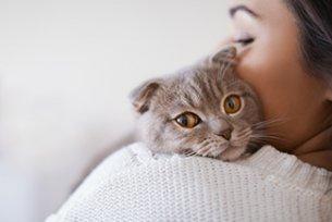 Melhor ração para colite crônica em gatos
