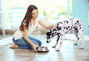 Melhor ração para cistite canina