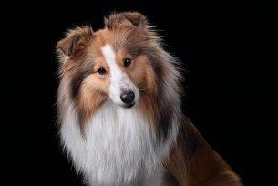 Melhor ração para cães com problemas dermatológicos