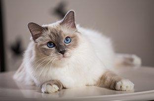 O que é esporotricose em gatos? Como cuidar?