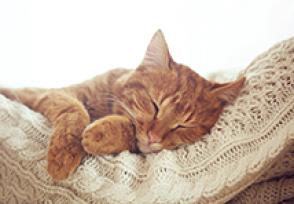 Gestação de gato: cuidados pós-operatórios