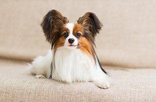 Ração para cachorro idoso de raças pequenas
