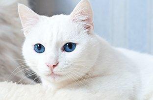 Gato com diarreia: cuidados com a alimentação