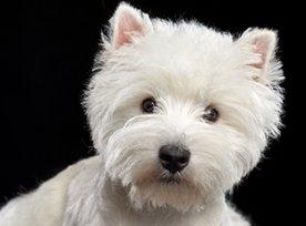 Ração com probiótico para cachorro
