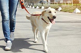 Passear com cachorro: importância e cuidados