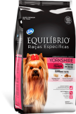 Yorskhire Terrier Adulto