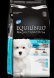 Maltese - Puppy