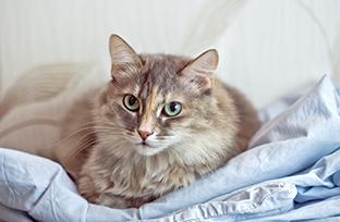 Gatos castrados: sepa m�s sobre el comportamiento y la alimentaci�n de los felinos