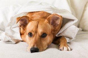 Cistitis en perros - causas, s�ntomas y tratamientos