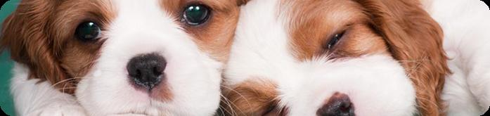 Alimentação para Cães Recém-nascidos
