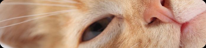 Alimentos para Gatos com Problemas Urin�rios
